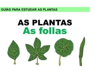 As plantas: follas